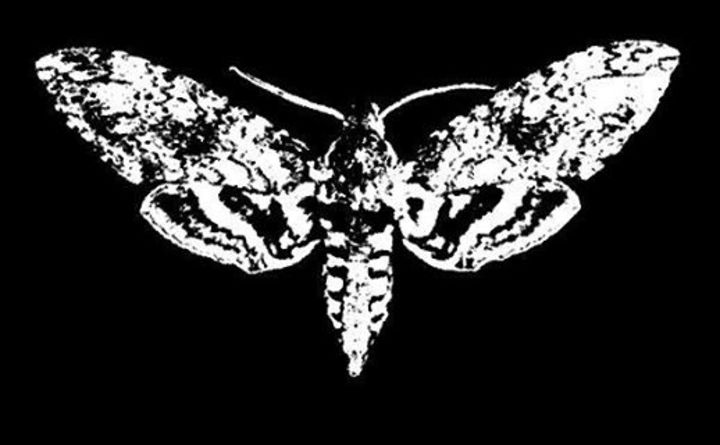 The Moth Anatomy Tour Dates
