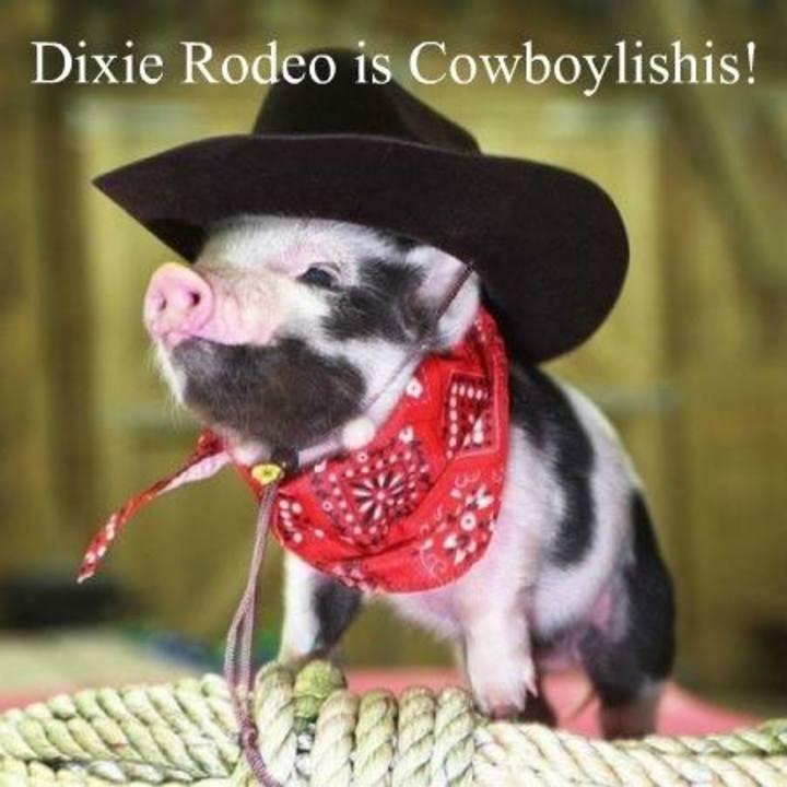 Dixie Rodeo Tour Dates