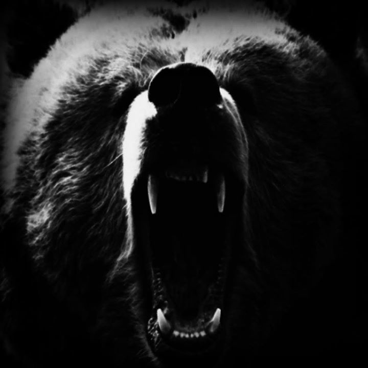 Mafia Bears Tour Dates