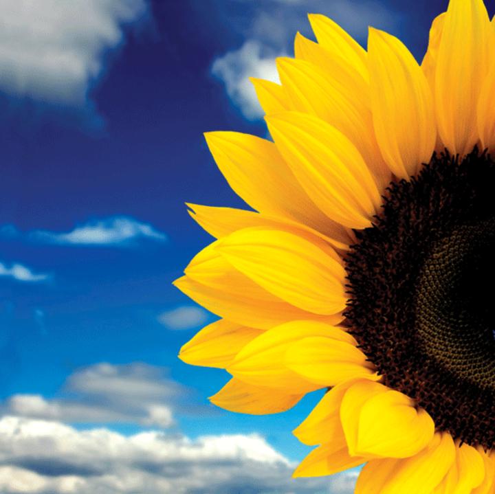 Trupa Floarea Soarelui Tour Dates