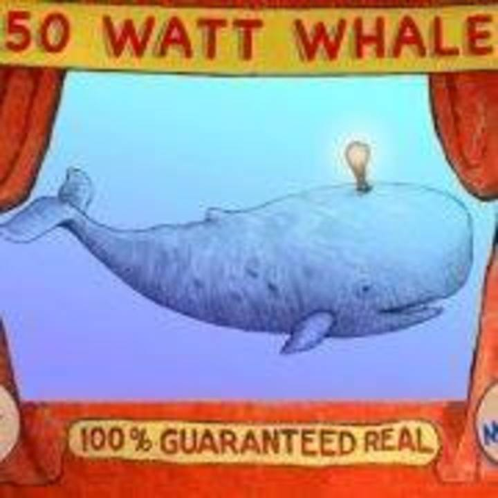 50 Watt Whale Tour Dates