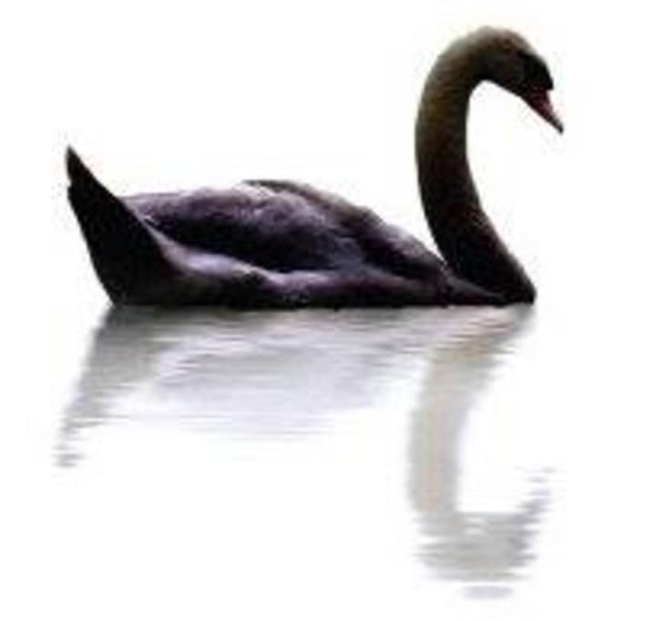 Black Swan Lane Tour Dates