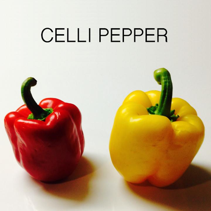 Celli pepper Tour Dates