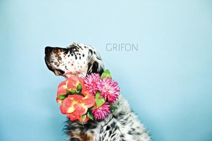 Grifon Tour Dates