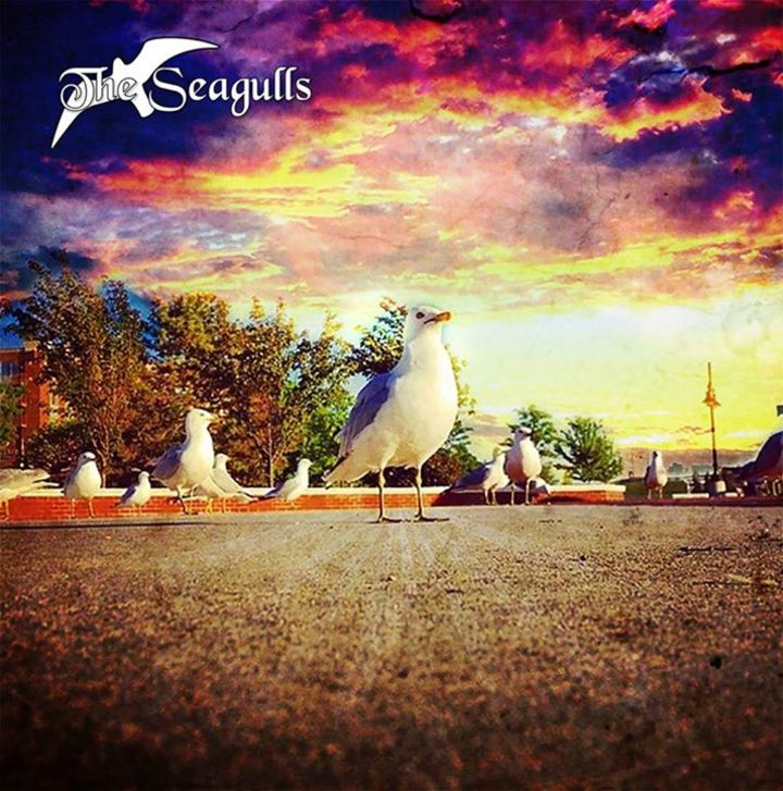 The Seagulls Tour Dates