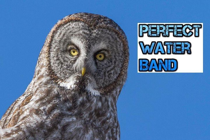 Perfect Water Band Tour Dates