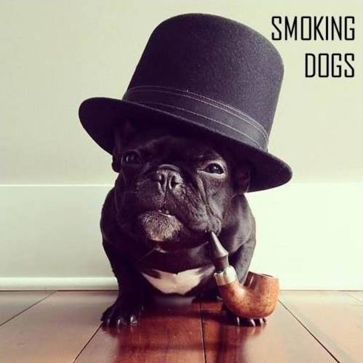 Smoking Dogs Tour Dates