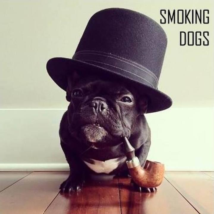 Smoking Dogs Tour Dates