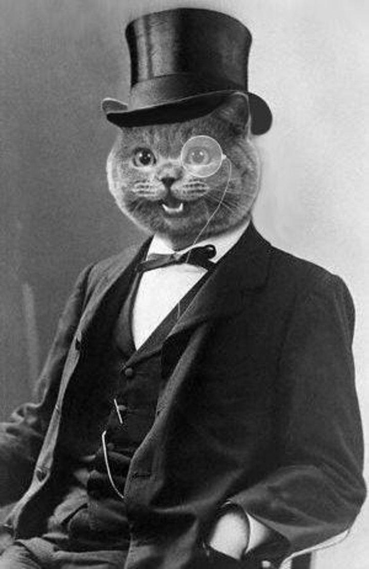 Fancy Cat Tour Dates