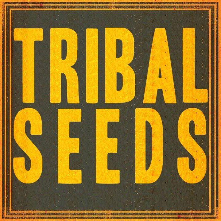 Tribal Seeds @ Jannus Live - St Petersburg, FL