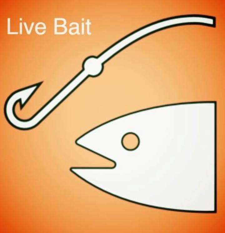 Live Bait Acoustic Duo Tour Dates