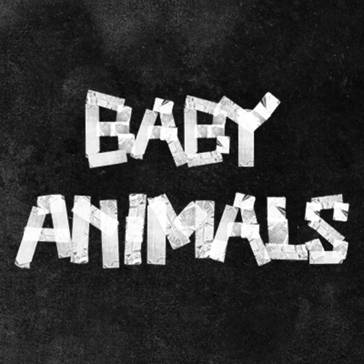 Baby Animals Music Tour Dates