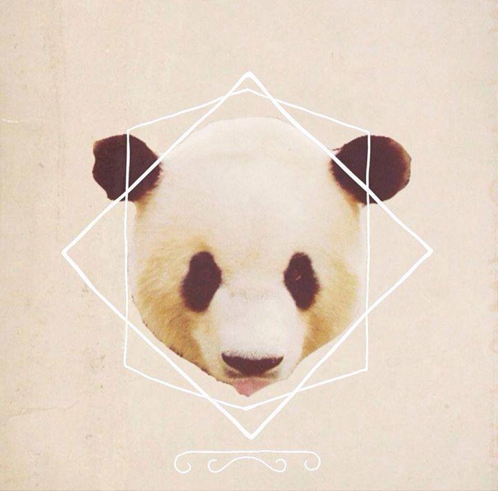 Cocaine Panda Tour Dates