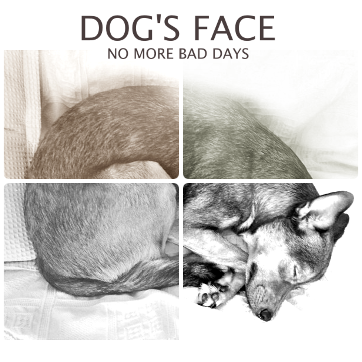 Dog's Face Tour Dates