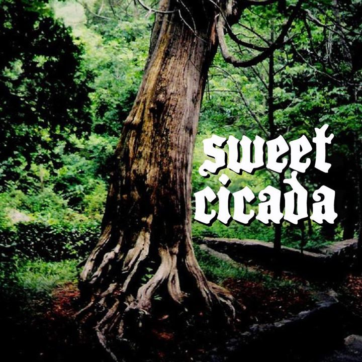 Sweet Cicada Tour Dates