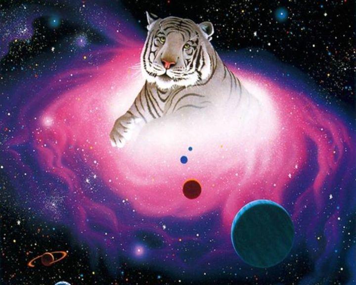 Tango Moon Tigers Tour Dates