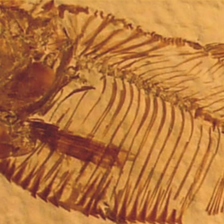 Pepperjam Tour Dates