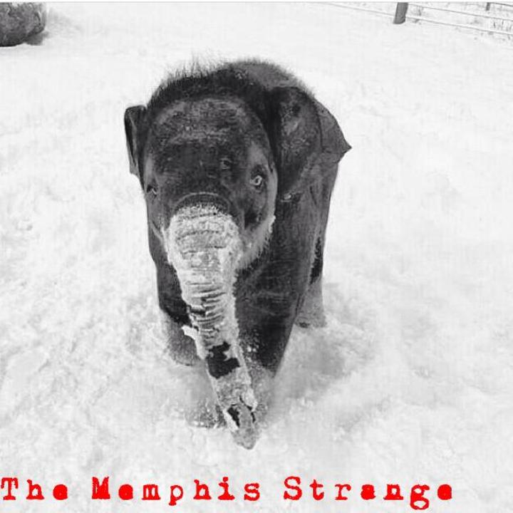 The Memphis Strange Tour Dates