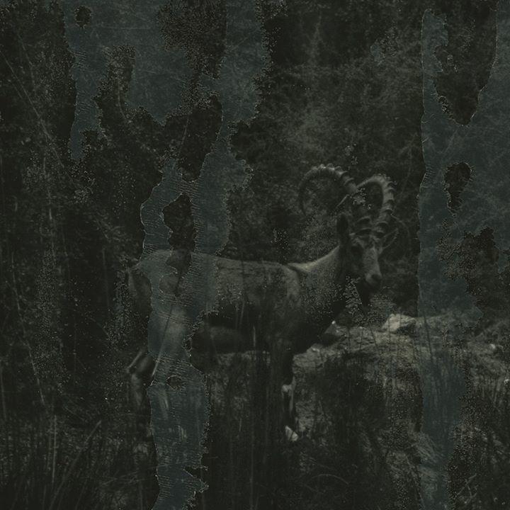 Albert af Ekenstam Tour Dates
