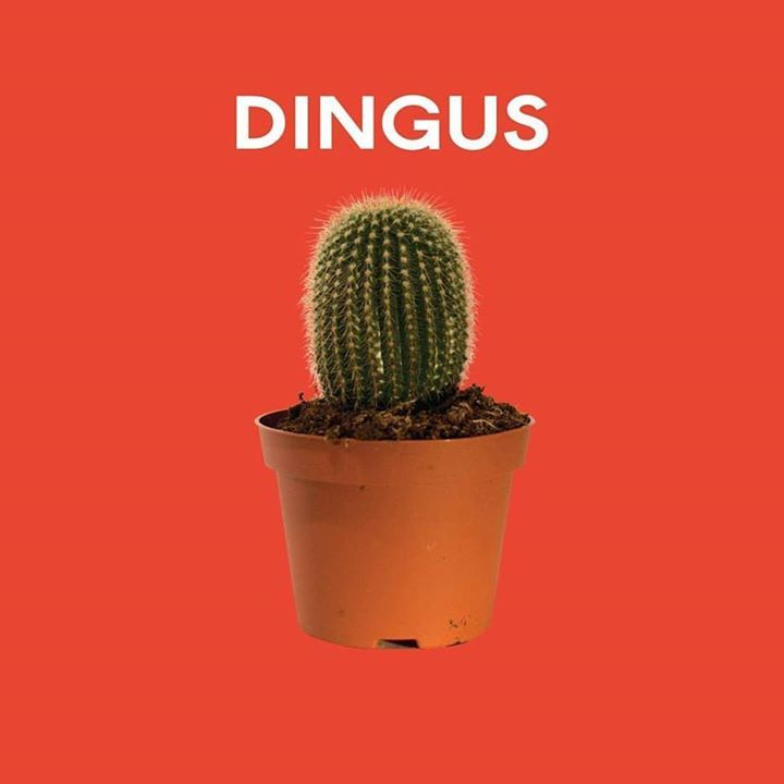 Dingus Tour Dates