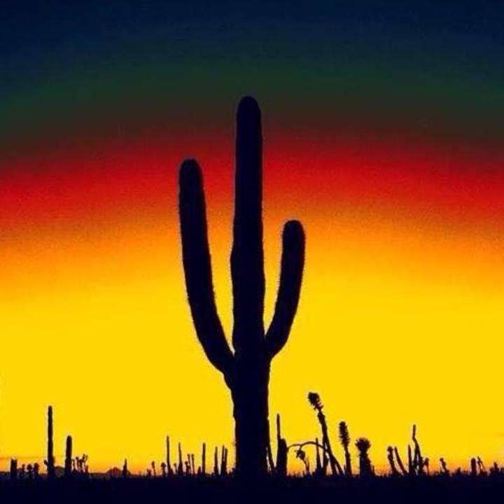 The Desert Beats Tour Dates