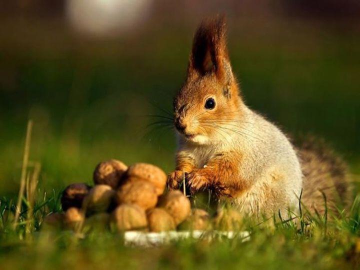 Squirrel Butter Tour Dates