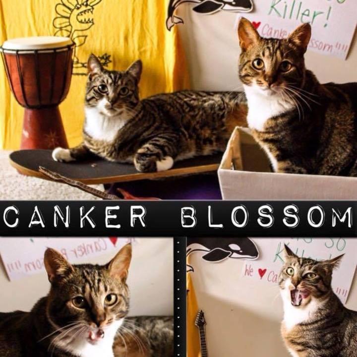 Canker Blossom Tour Dates