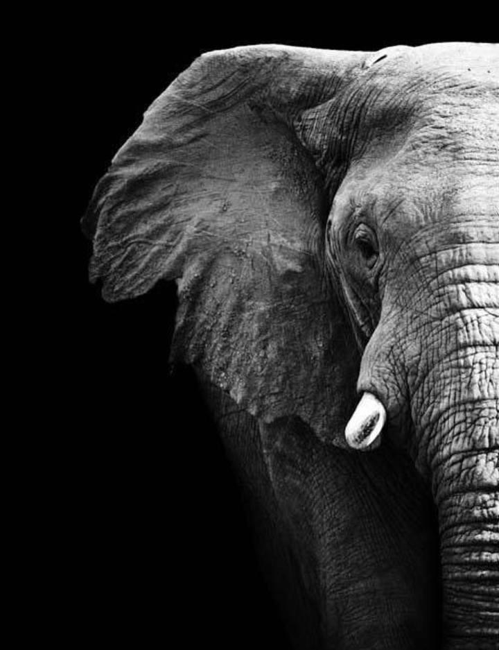 Black Elephant Tour Dates