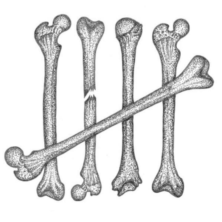 The Skeleton Club Tour Dates