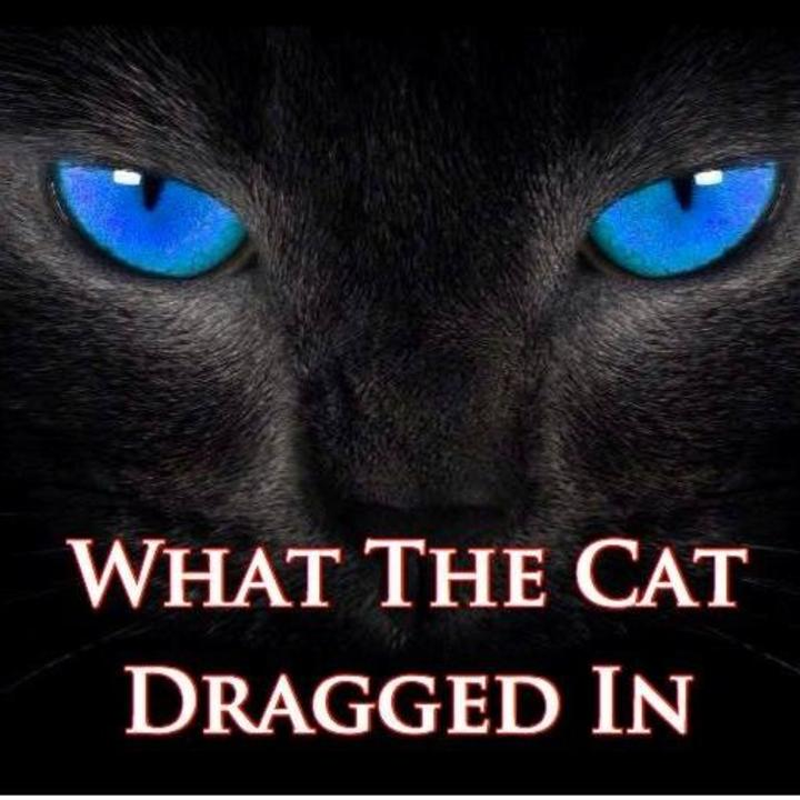 What The Cat Dragged In Tour Dates