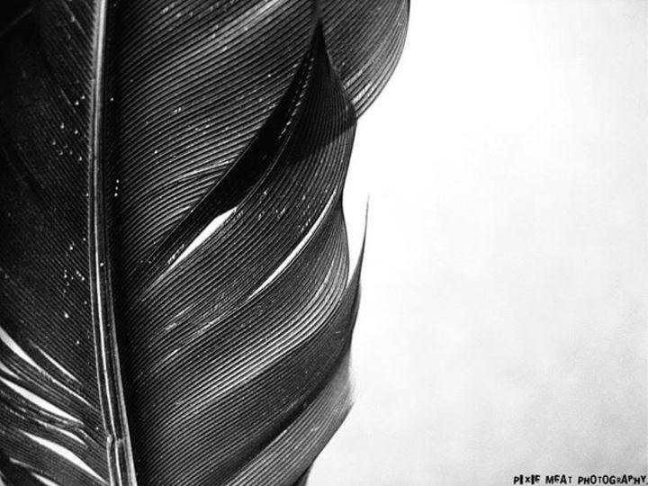 Black Feather @ The Bullfrog - Redford, MI