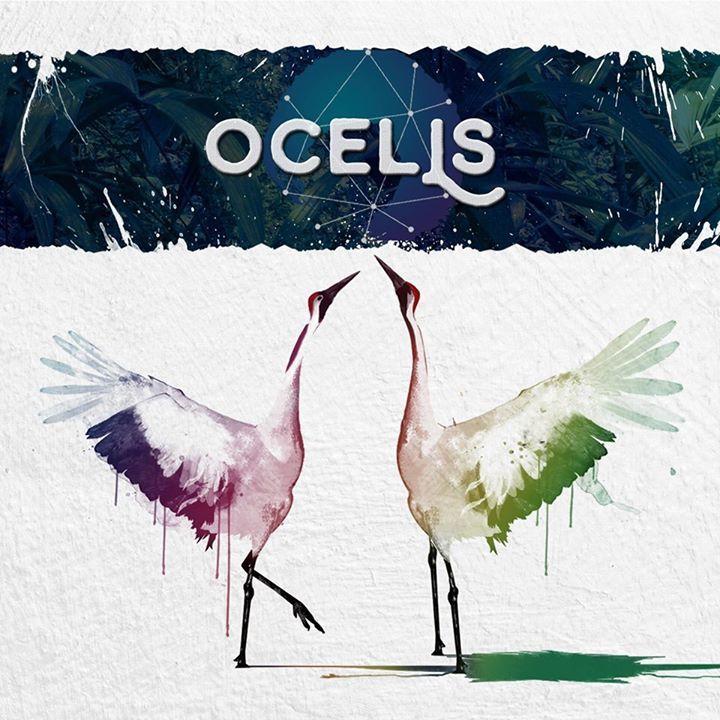 Ocells @ SALA PAGESOS - Sant Feliu De Llobregat, Spain