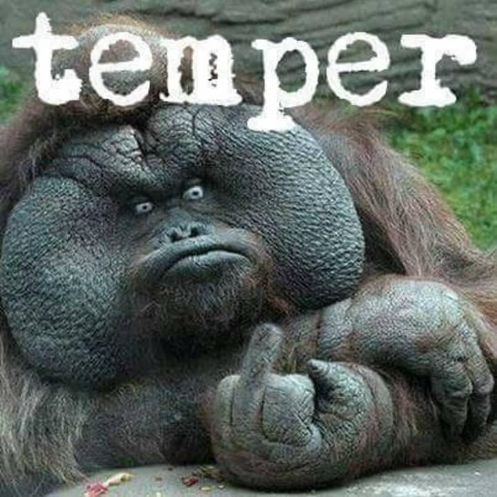 Temper Tour Dates