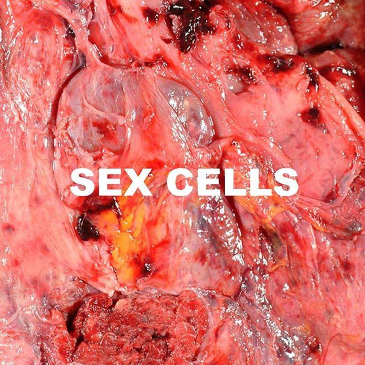 Sex Cells Tour Dates