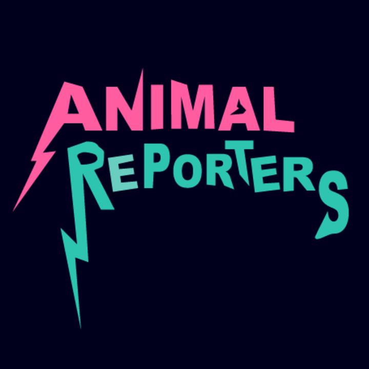 Animal Reporters @ Pianos NYC - New York, NY