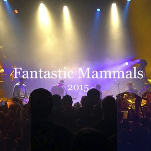 Fantastic Mammals Beat Kitchen
