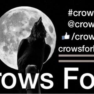 Crows Fork Chicks Tap Room