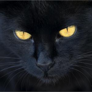 el gato negro Le Temps Machine