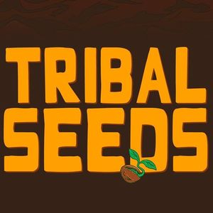 Tribal Seeds Belly Up Aspen