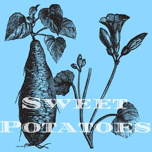 Sweet Potatoes Music Ten Italian Cafe