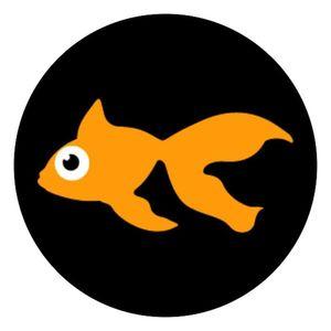 Goldfish Santa Clarita
