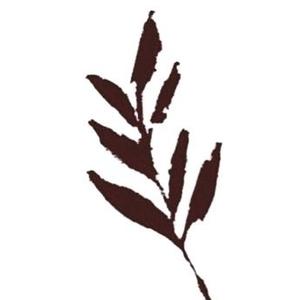 The Album Leaf The Casbah