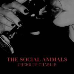 The Social Animals Two Harbors