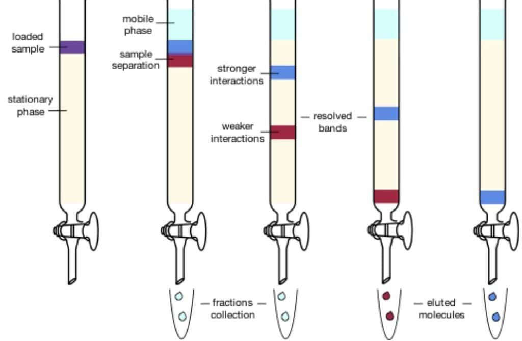 The Basics Of Running A Chromatography Column Bitesize Bio