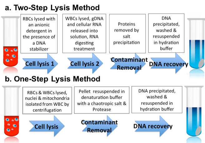 Dna Extraction Protocol Choosing Whole Blood Dna