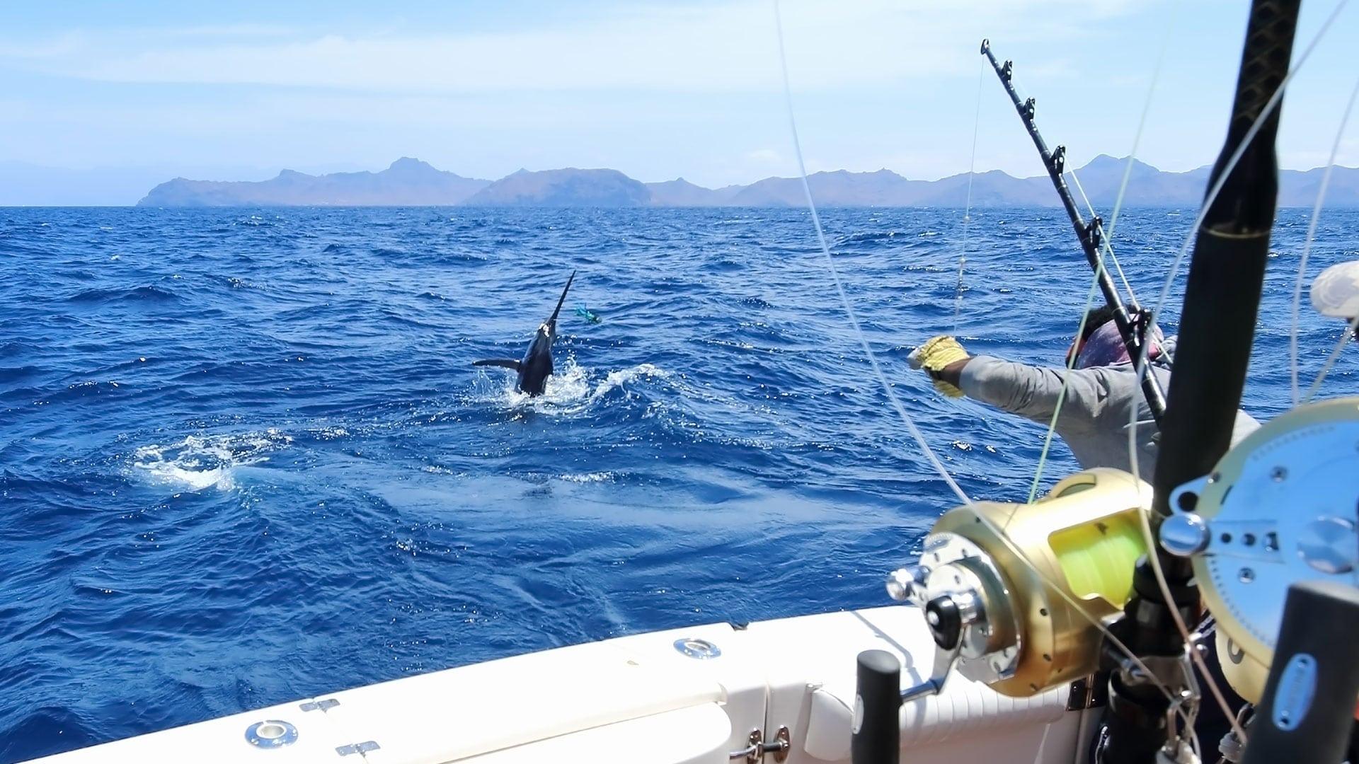 Where Is Jupiter Florida >> Offshore Fishing | Lawless Sportfishing Charters