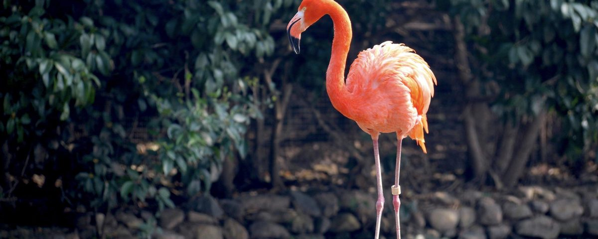flamingo-01