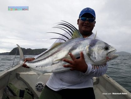 Roosterfish Everywhere!! Lets go catch some!
