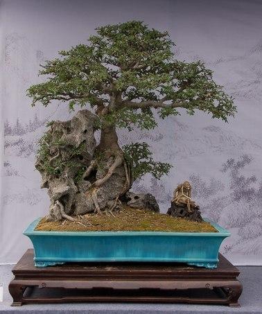 Bonsai Rock Planting