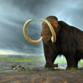 Woolly mammoth big square